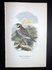 C. W. Gedney 1888 Antique Hand Col Bird Print. Cut-Throat